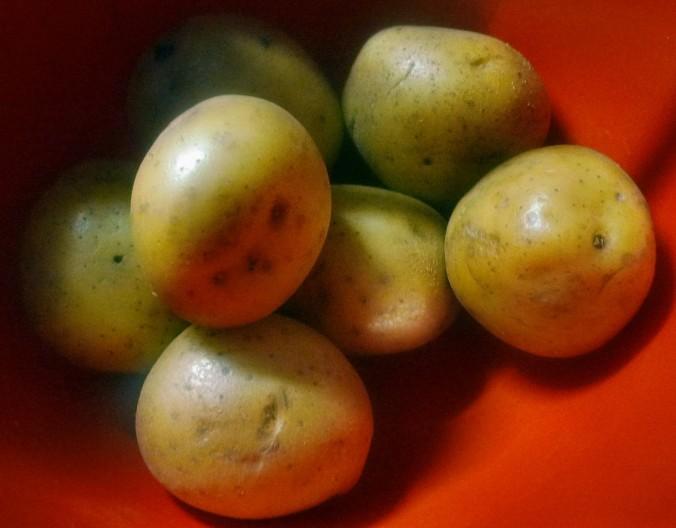 Sauerkeaut-Kartoffelbrei -18.1.15   (4)