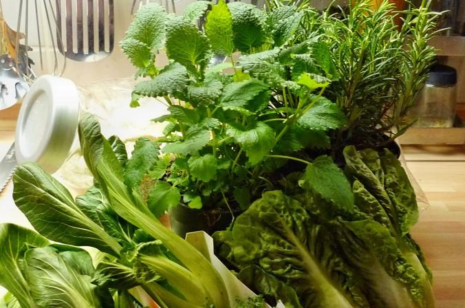 Nudeln mit Gorgonzola,Pak Choy,Salat, - 1.3.2015   (3)