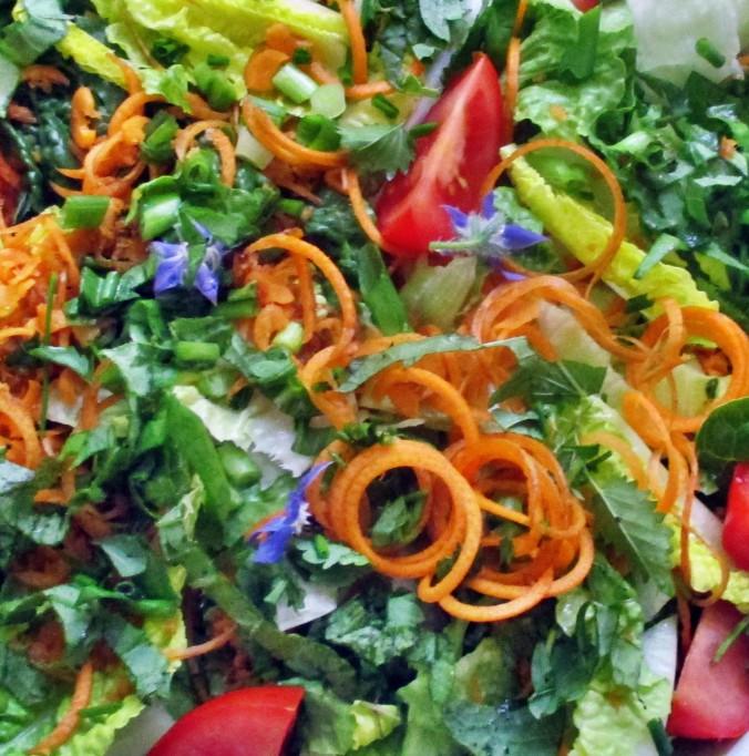 Zucchinispagetthi,Salate-30.6.15   (4)