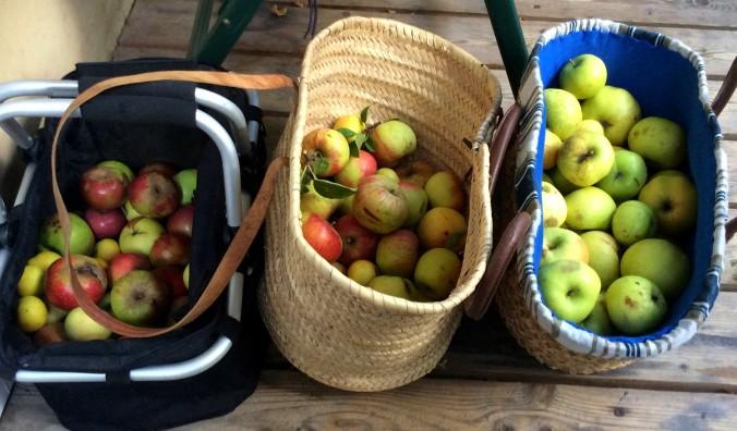 Äpfel,Birnen - 27.9.15   (1)