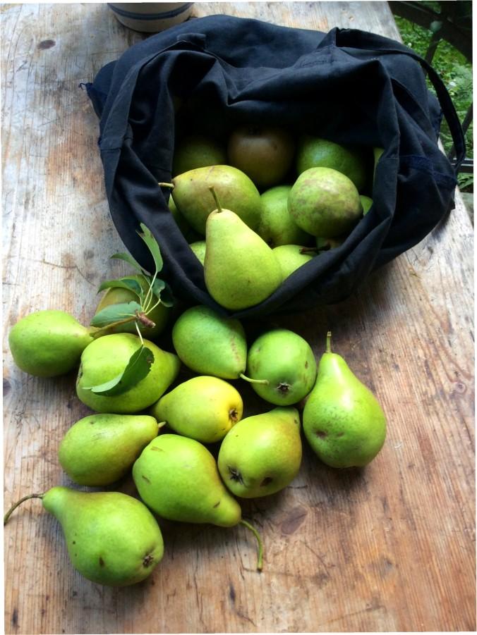 Äpfel,Birnen - 27.9.15   (3)