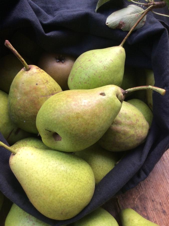 Äpfel,Birnen - 27.9.15   (4)