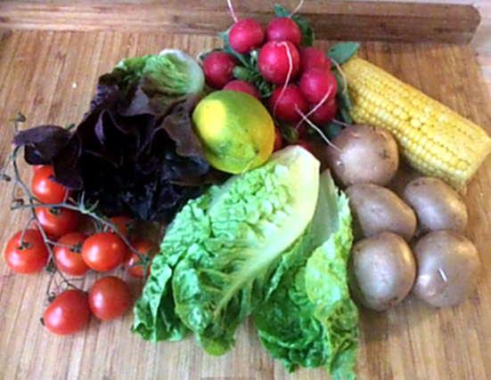 Champignon,Mais,Salat,Kartoffel (2)