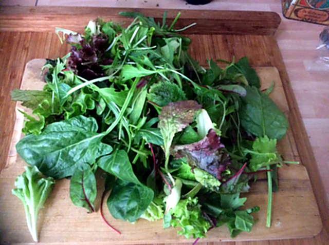 2.4.16 - Meeresspaghetti,Reisnudeln,Tomatensauce.Salat (4)