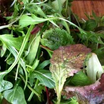 2.4.16 - Meeresspaghetti,Reisnudeln,Tomatensauce.Salat (5)