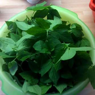 24.4.16 - Gierschgemüse,Ravioli,Bärlauchpesto,Rhabarberkompott,vegetarisch (7)