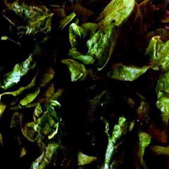 26.4.16 - Spinat,Rührei,Kartoffeln,vegetarisch (6)