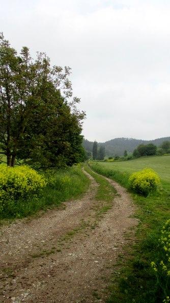 29.5.16 - Landmarkt Reinstädt-Spaziergang Wittersroda (24)