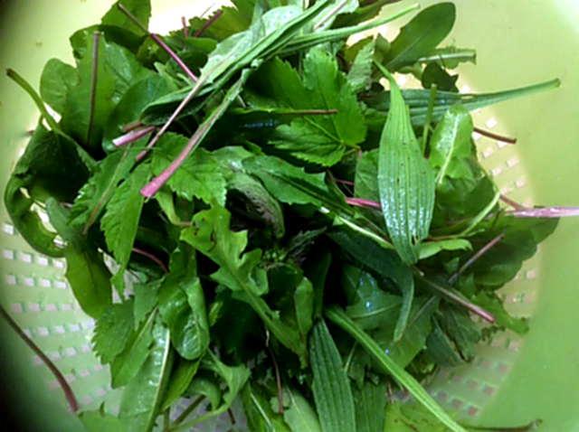 3.5.16 - Grüne Nudeln,Bärlauchpesto,Wildkräutersalat  (2)