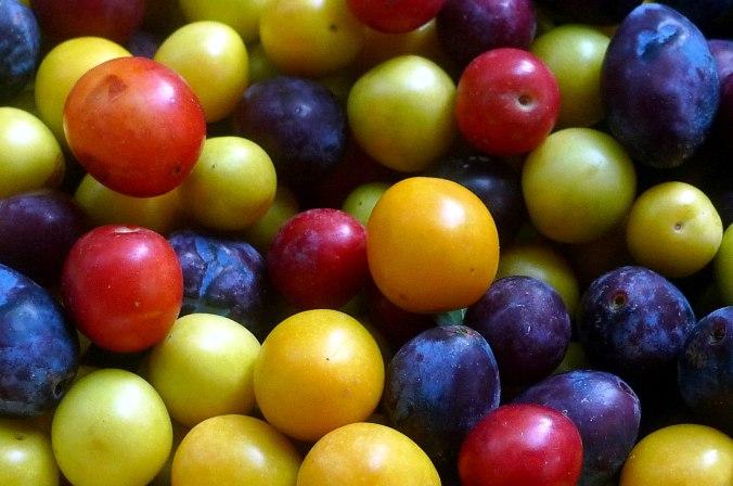 Obst aus Nermsdorf 2