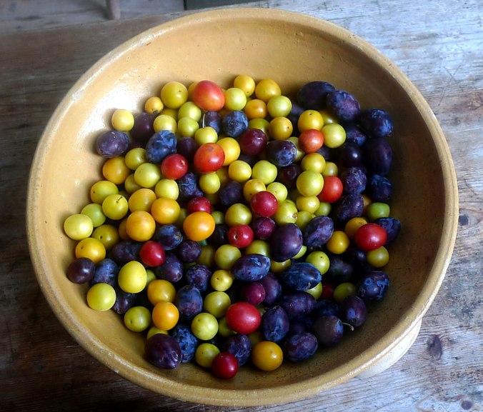 Obst aus Nermsdorf