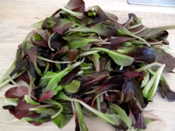 Bärlauchgnocchis,Tomatensugo,Salate (11)