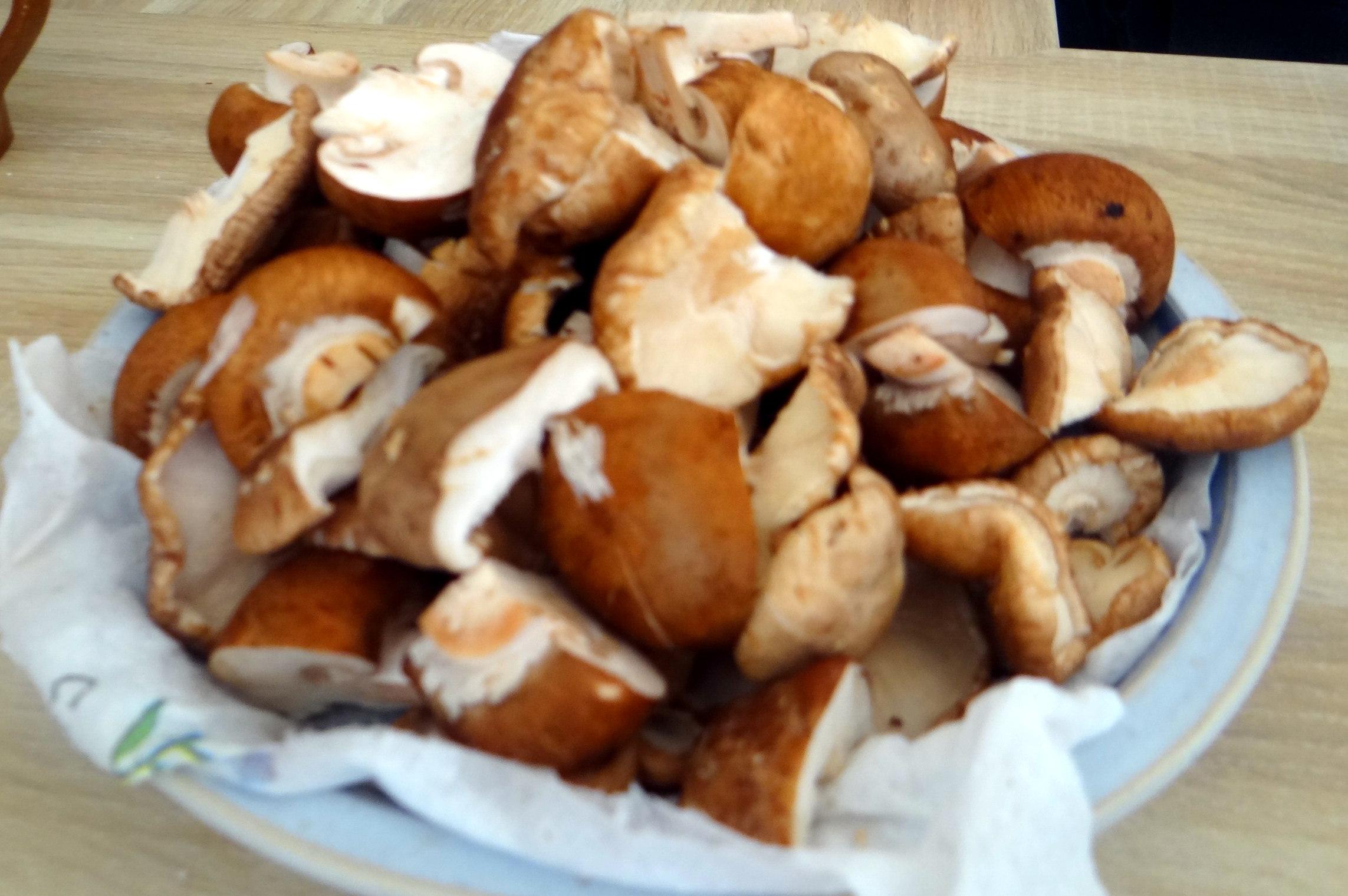 Shitake,Champignon,grüner Spargel,Pellkartoffeln,Rosins Kuchen (4)