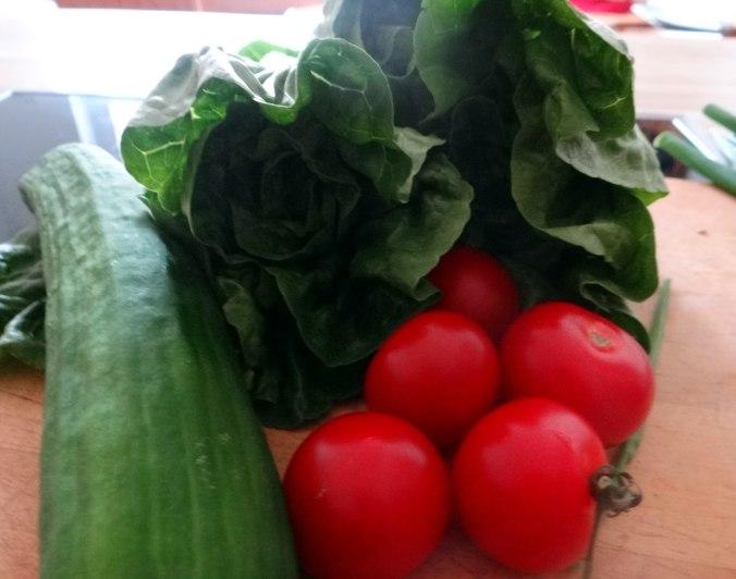 Salat,Karotten,Bratkartoffeln,Spiegelei (8)