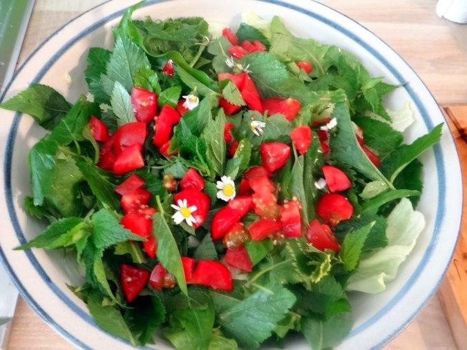 Wildkräuter Salat,Boullion Kartoffeln (14)