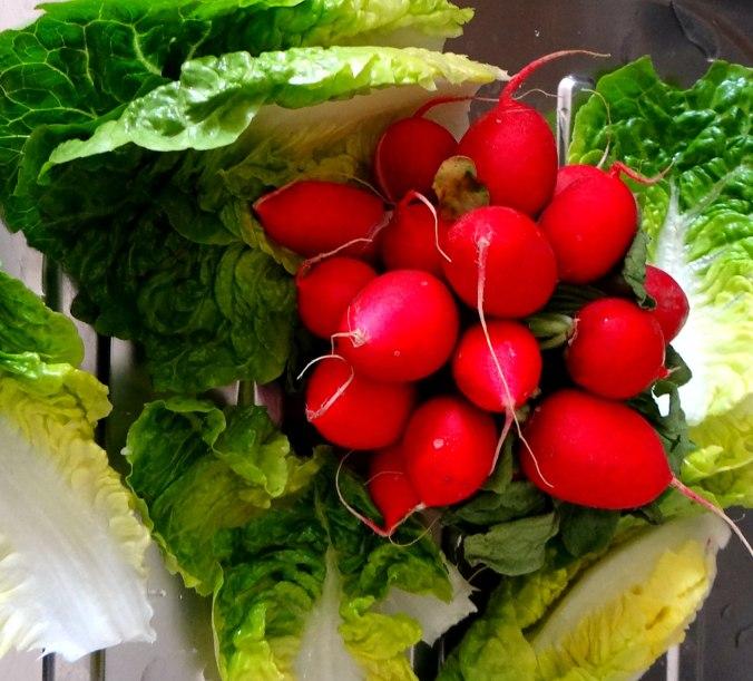 Gebratene Kloßscheiben,Schinkensauce,Salat,Erdbeeren (5)