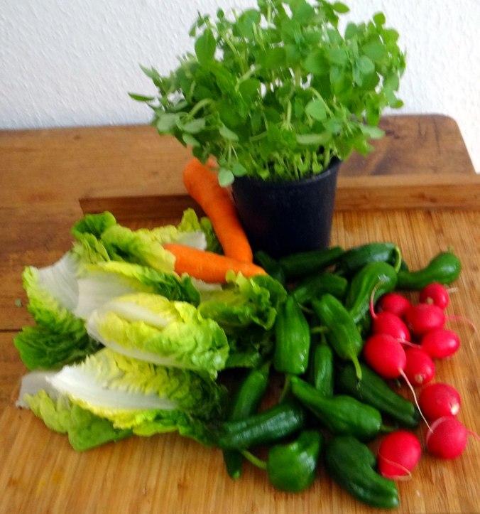 Gebratene Kloßscheiben,Schinkensauce,Salat,Erdbeeren (6)