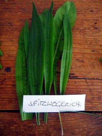 Grüne Soße aus Wildkräutern,Pellkartoffeln,Joghurtspeise mit Waldhe3idelbeeren (11)