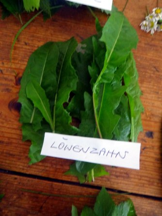 Grüne Soße aus Wildkräutern,Pellkartoffeln,Joghurtspeise mit Waldhe3idelbeeren (12)