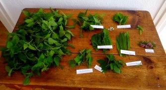 Grüne Soße aus Wildkräutern,Pellkartoffeln,Joghurtspeise mit Waldhe3idelbeeren (15)