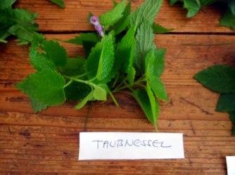 Grüne Soße aus Wildkräutern,Pellkartoffeln,Joghurtspeise mit Waldhe3idelbeeren (7)