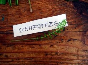 Grüne Soße aus Wildkräutern,Pellkartoffeln,Joghurtspeise mit Waldhe3idelbeeren (9)