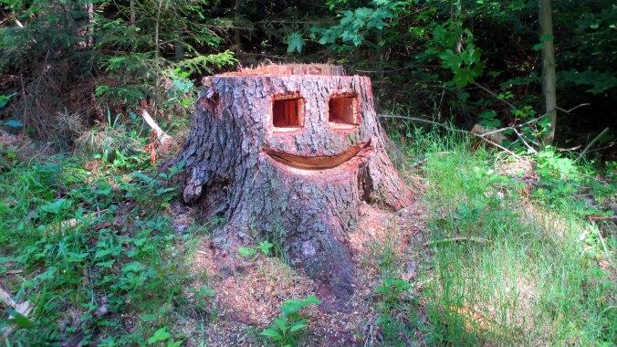 Wald ,Spaziergang,Sonntag,Vormittag (1)
