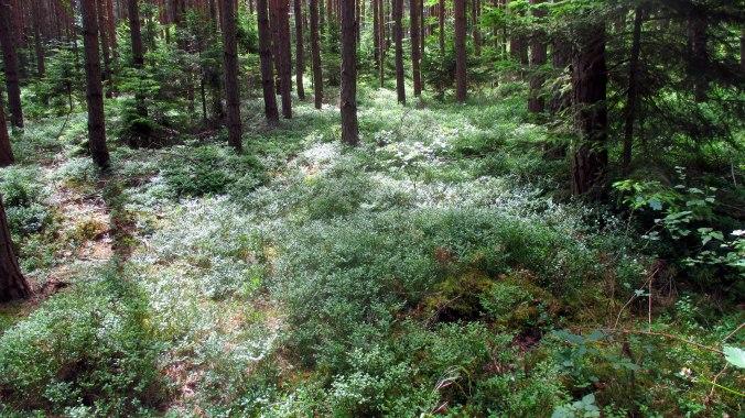 Wald ,Spaziergang,Sonntag,Vormittag (12)