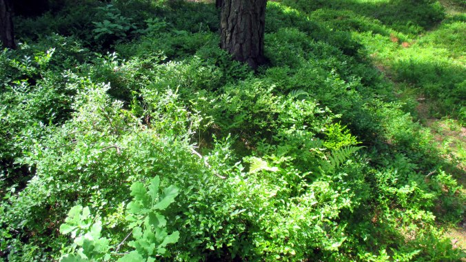 Wald ,Spaziergang,Sonntag,Vormittag (15)