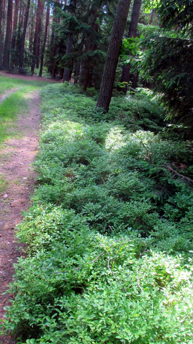Wald ,Spaziergang,Sonntag,Vormittag (16)