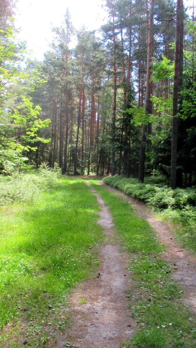 Wald ,Spaziergang,Sonntag,Vormittag (20)