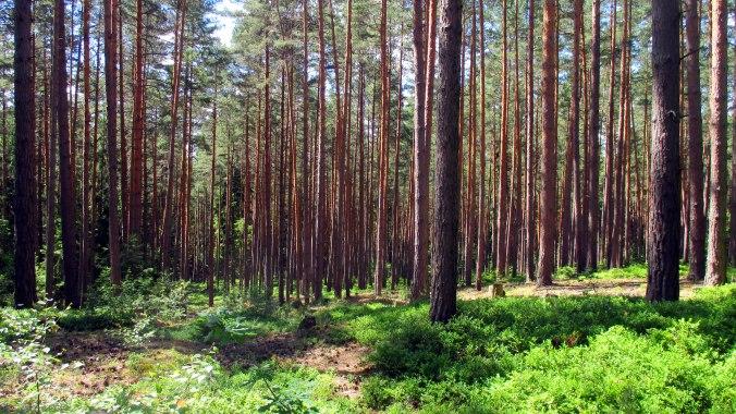 Wald ,Spaziergang,Sonntag,Vormittag (21)