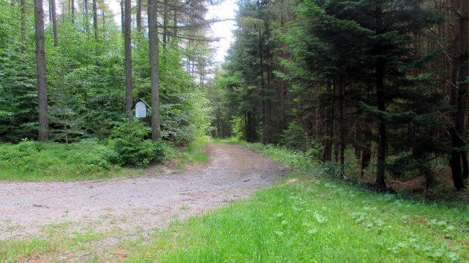 Wald ,Spaziergang,Sonntag,Vormittag (23)