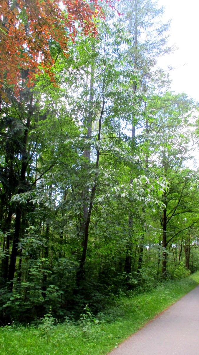 Wald ,Spaziergang,Sonntag,Vormittag (24)
