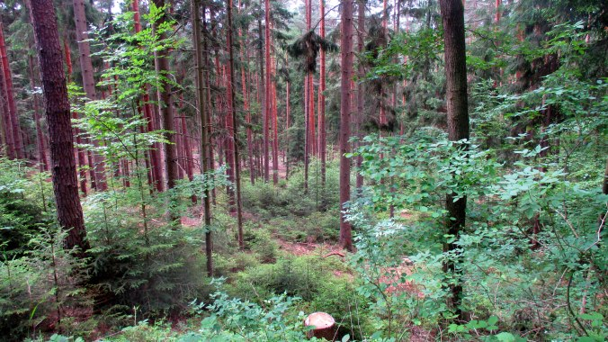 Wald ,Spaziergang,Sonntag,Vormittag (4)