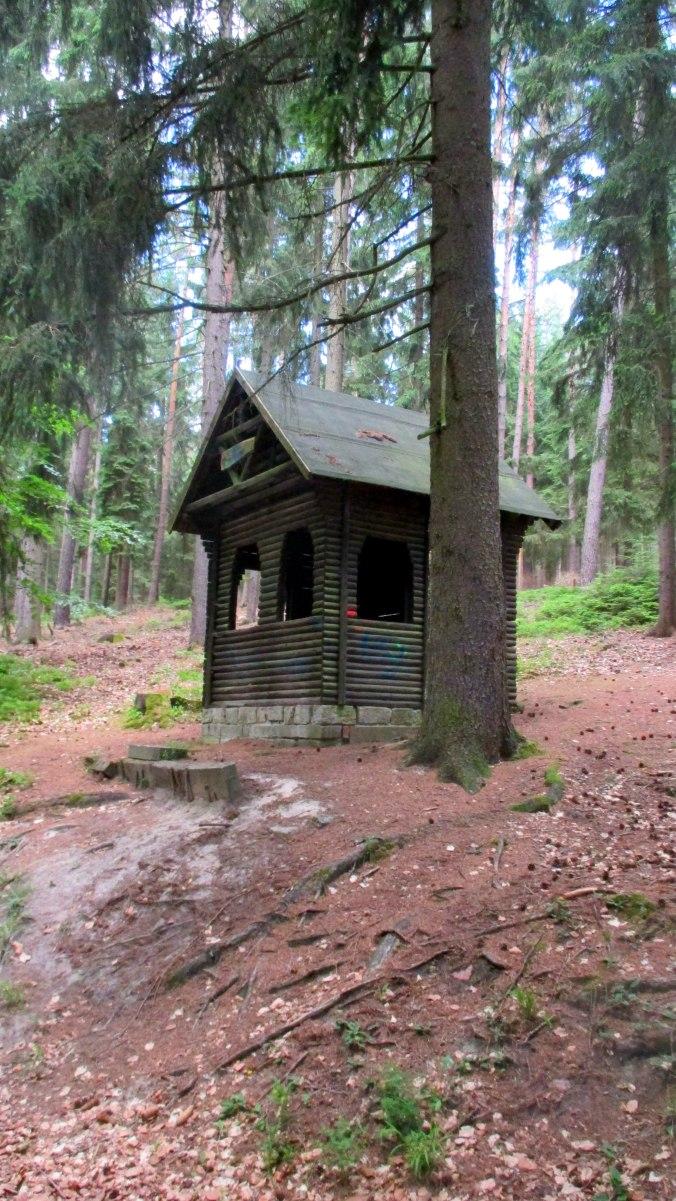 Wald ,Spaziergang,Sonntag,Vormittag (5)