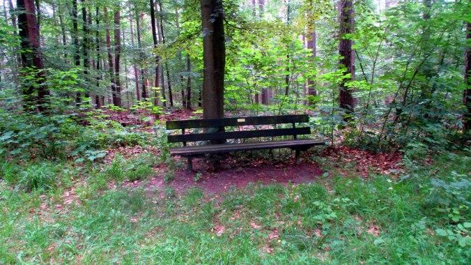 Wald ,Spaziergang,Sonntag,Vormittag (6)