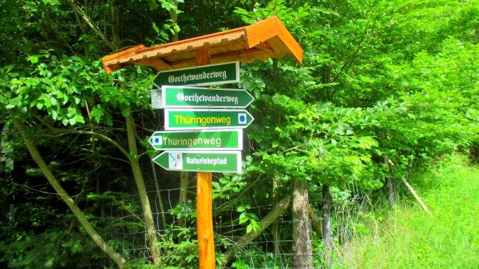 Wald ,Spaziergang,Sonntag,Vormittag (7)