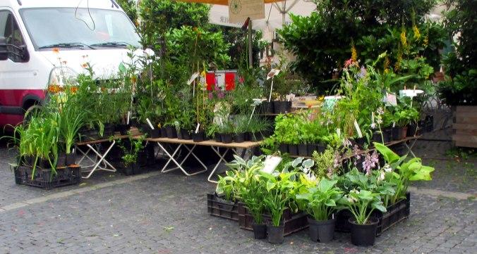 Wochenmarkt (6)