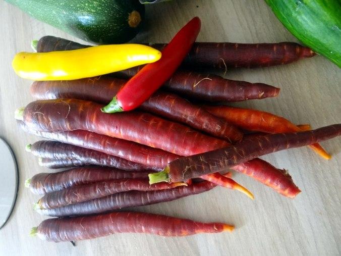 Lauwarmer Zucchinisalt,gedämpfte Möhren,Gurkensalat,Guacamole (5)