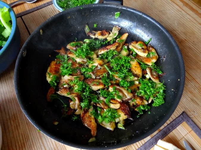 Austernpilze,Gurkensalat,Kopfsalat,Pellkartoffeln,vegetarisch (8)