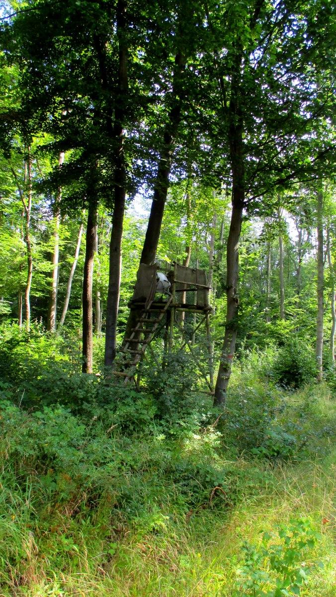 Buchenwald (13)