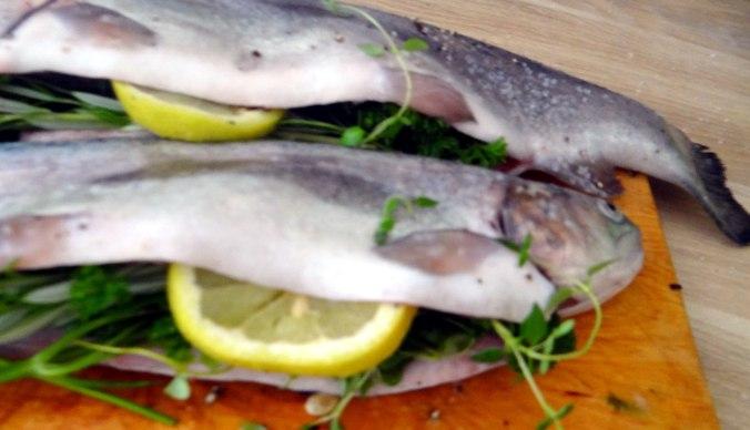 Forelle mit Zitronen Kartoffeln,Pflücksalat (2)
