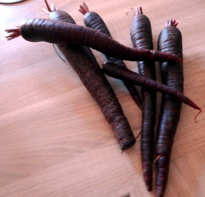 Schwarze Möhren mit weißem Quinoa (4)