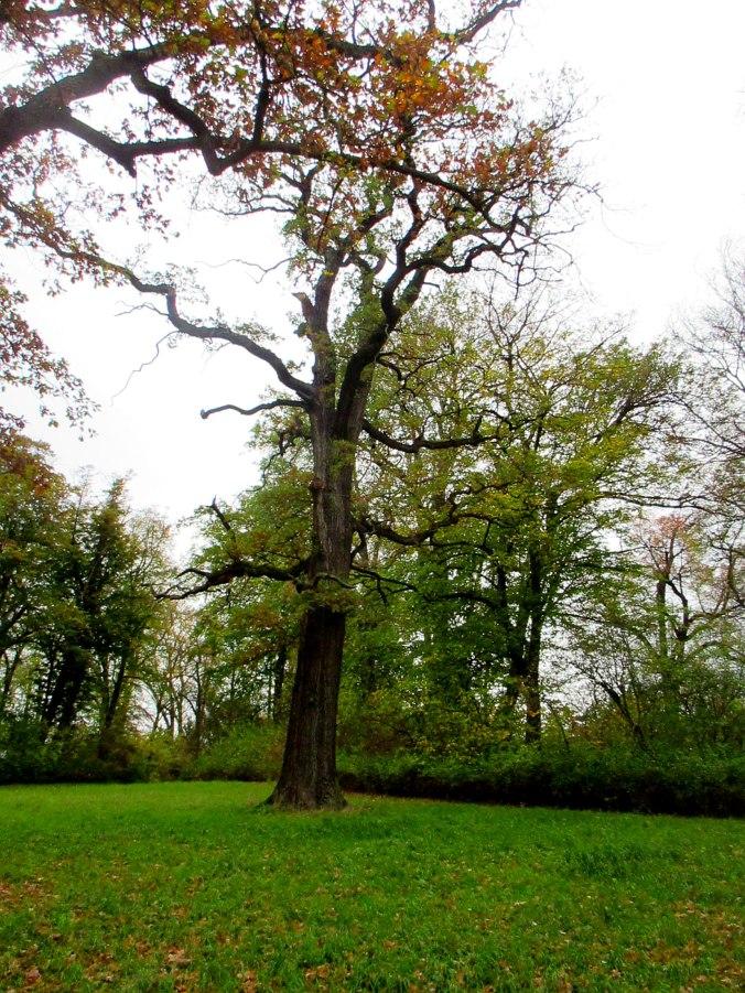 Belvedere im Herbst (12)