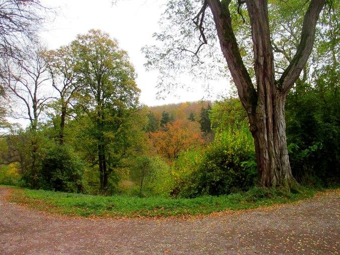 Belvedere im Herbst (19)