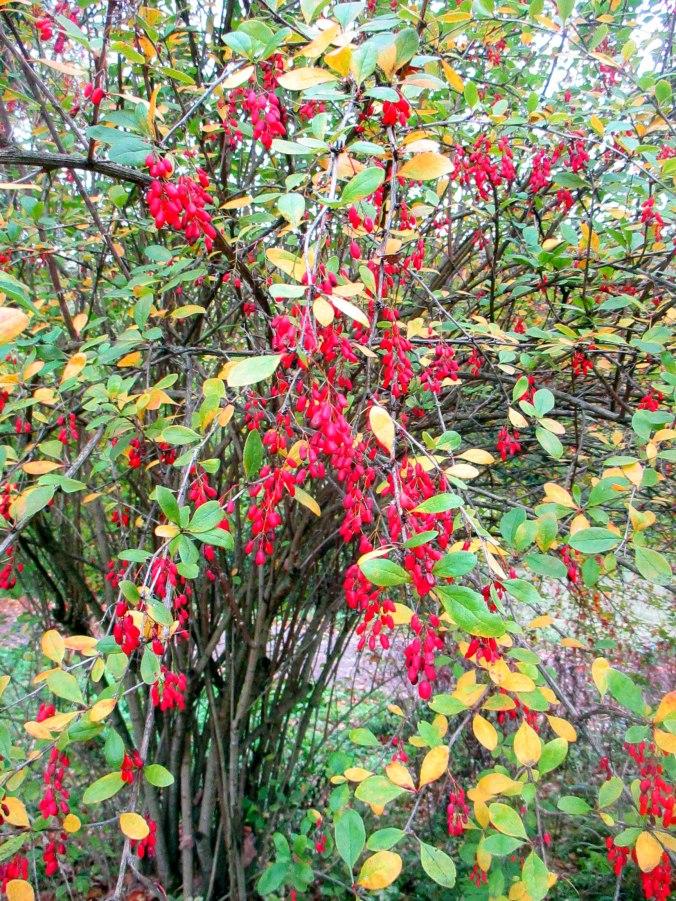 Belvedere im Herbst (21)