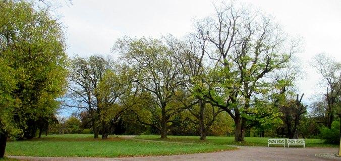 Belvedere im Herbst (4)