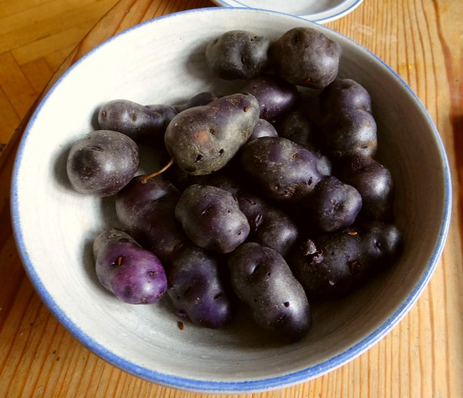 Rotbarsch,Kohlröschen,violette Kartoffeln (14)